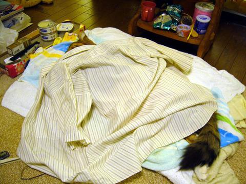Shirt20080528