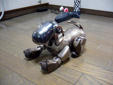 Aibo20080920