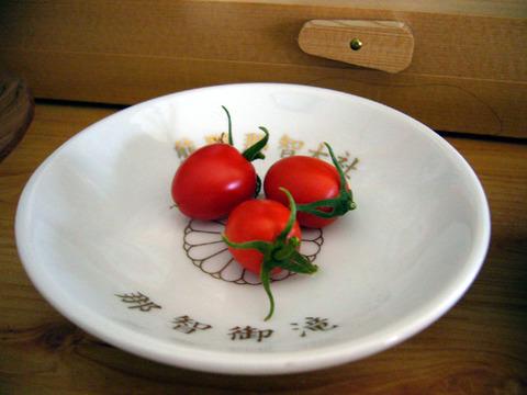 Tomato20080928