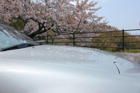 Sakura_20120727
