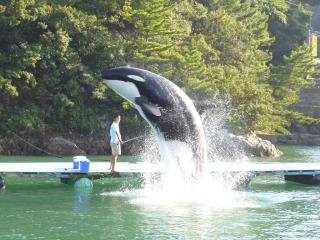 Orca220060805