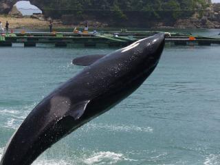 Orca320060805