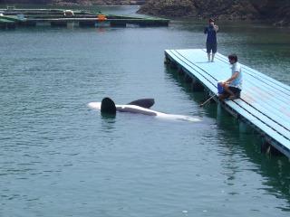 Orca620060805