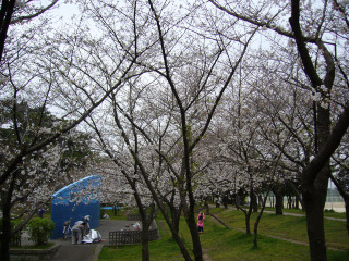 Sakura120070401